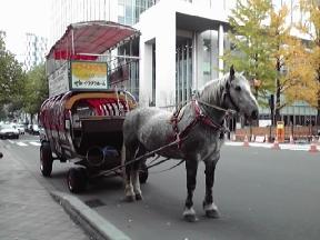 観光馬車です
