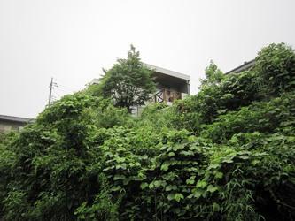怒涛に生い茂った樹木 その2
