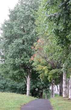 北海道の夏 紅葉