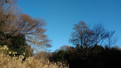 相模原の1月風景